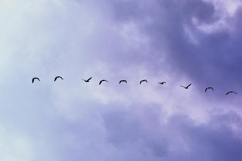cloud migration service migrasi server google partner indonesia